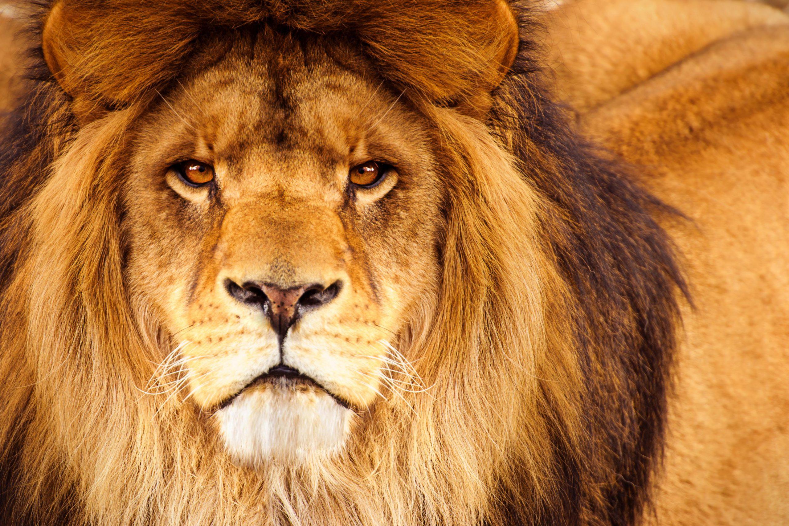 Malha fina? Dicas para você não cair nas garras do leão!